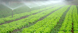 Farming Irrigation Design